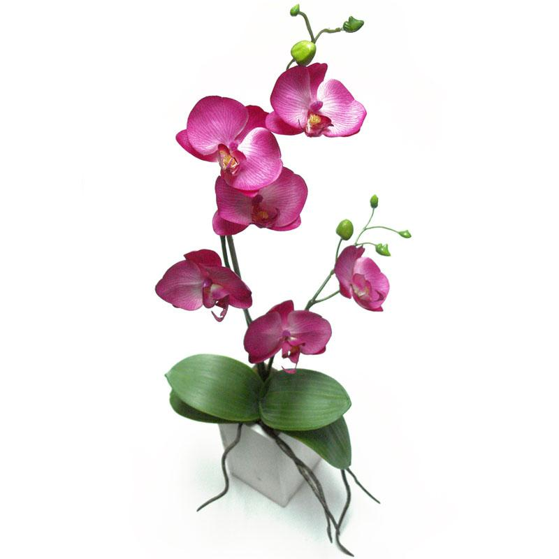 Foto maceta madera orqu dea fucsia foto 439227 - Maceta para orquideas ...