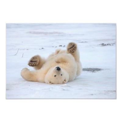 oso bailarín anuncios de gigolos
