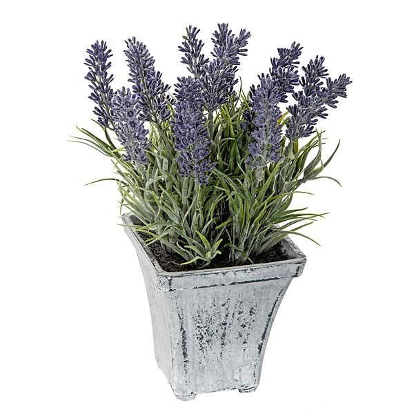 for Fotos de plantas en macetas